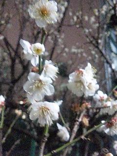 立春とは名ばかり。。。